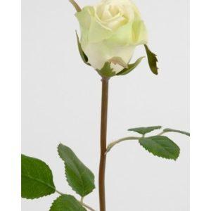 Lime Rose 50 cm. 2889-90