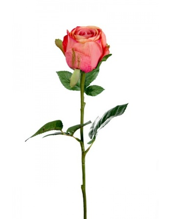 Rose stort hoved stilk 50 cm. Abrikos 9603-30